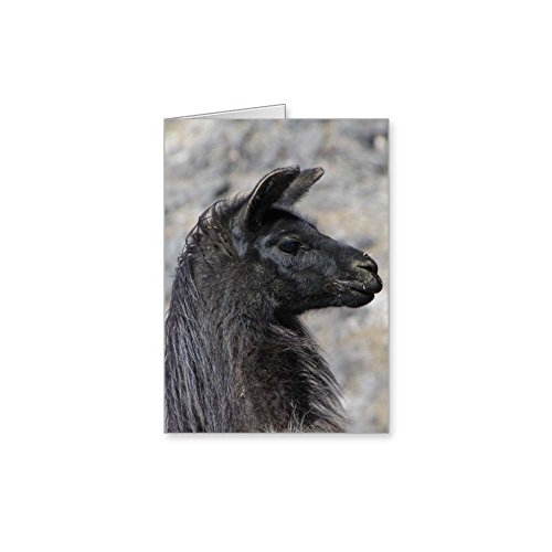 Llama 10 note card value pack best set of assorted blank inside llama 10 note card value pack best set of assorted blank inside all occasion foldover greeting m4hsunfo