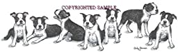 Boston Terrier - Puppies in a Row by Cindy Farmer