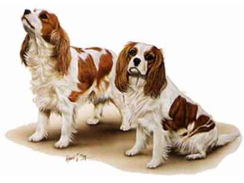 Cavalier King Charles Spaniels Dog Robert May Art Greeting Card Set of 6