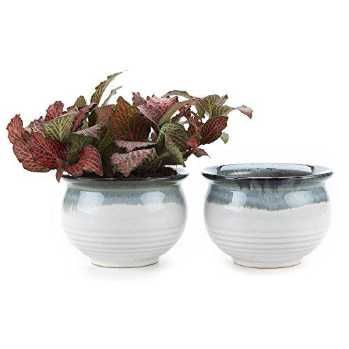 T4U 3.5 Inch Ceramic Flowering Glaze Sucuulent Plant Pot/Cactus Plant Pot Flower Pot/Container/Planter White Package 1 Pack of 2