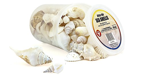 bucket-osea-shells-10-ounces-white-by-hygloss