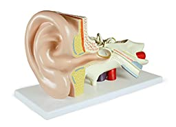 Vision Scientific VAE402-AN Ear Model, 3 Parts, 3x Size