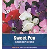 De Ree Sweet Pea Spencer Mixed Garden Flower Plant 17 Seeds
