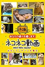 ネコネコ動画 ~おもしろニャンコ大集合~ [DVD]