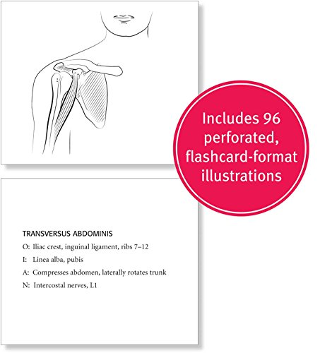 Kaplan Medical Coloring Book Anatomy Anatomia Dibujos