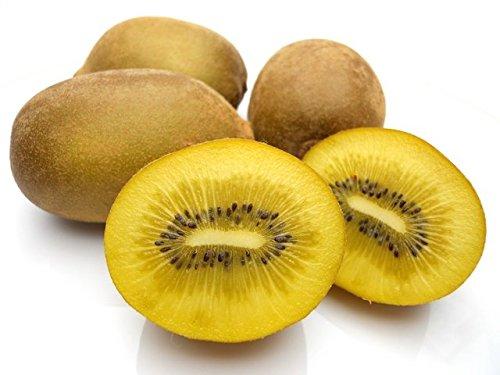 匠が推す 素敵な輸入生果実 ニュージーランド産 ゴールデンキウイ 約3.5kg