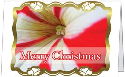 Christmas Holidays Candy Cane Flower Seasons