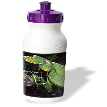 Wb_83978_1 Danita Delimont - Snakes - Emerald Tree Boa Snake - Na02 Dno0480 - David Northcott - Water Bottles back-380329