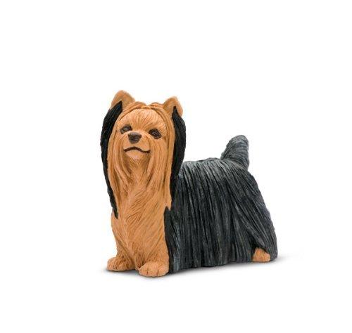 Best in Show: Yorkshire Terrier - 1
