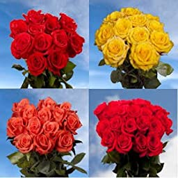 50 Red Roses & 50 Color Roses | 100 Beautiful Roses perfect for Birthdays!