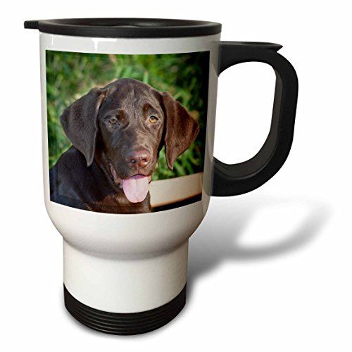 Danita Delimont - Dogs - Chocolate Labrador Retriever dog - NA02 ZMU0110 - Zandria Muench Beraldo - 14oz Stainless Steel Travel Mug (tm_140390_1)