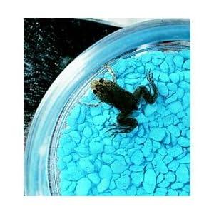 .com: Three Rivers Amphibian Grow-A-Frog Kit: Industrial & Scientific