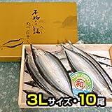 【紀州雑賀崎産】灰干製法のさんまの干物【灰干乾燥さんま】《3Lサイズ》 (3L10尾)