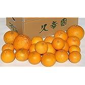 久幸園 和歌山有田の清見オレンジ♪農家直送!【訳あり】【3kg】