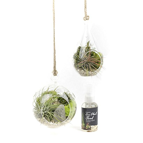 MakersKit Air Plant Terrarium Hanging Vases, Set of Two + Organic Plant Food