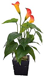 Fourwalls Polyurethane Artificial Real-Touch Calla Lily Plant (Orange, 40 cm)
