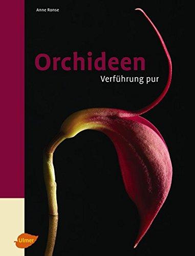orchideen-verfuhrung-pur
