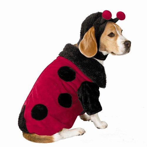 Ladybug pet costume - Medium - Medium