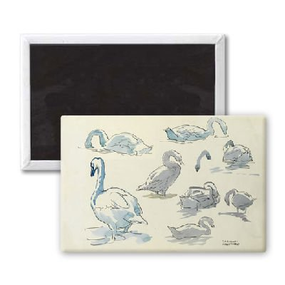 Studies of swans - 3x2 inch Fridge Magnet - large magnetic button - Magnet