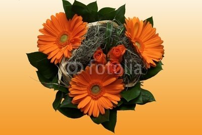 "Wallmonkeys Peel and Stick Wall Decals - Gerbera Orange - 18""W x 12""H Removable Graphic"