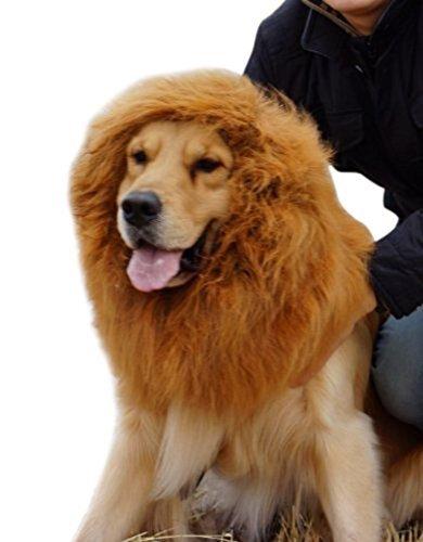 Large (Dog Halloween Costumes Lion)