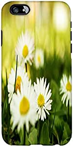 Snoogg camomile on a fiel Hard Back Case Cover Shield For Apple Iphone 6 S + / 6s Plus