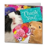 Thank You! Guinea Pigs Card