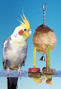 Cheap Bird Perch Penn Plax – MD HIDE TREAT CARIB (BACH2)