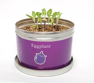 リトルガーデンプロ 加茂茄子 栽培セット 家庭菜園