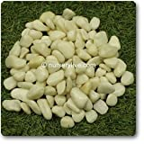 nursery live Ivory white solid aquarium pebbles(500gm)