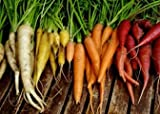 Search : Carrot Rainbow Blend DAR123NB (Muilti-Colors) 500 Open Polinated Seeds by David's Garden Seeds