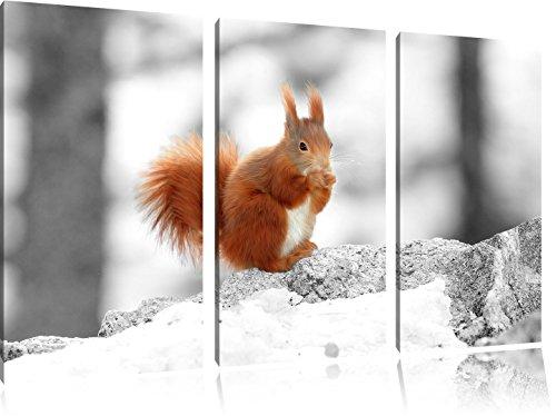 écureuil mignon dans neigeux forêt noir / blanc 3 pièces image image toile 120x80 sur toile, XXL énormes Photos complètement encadrée avec civière, impression d'art sur murale avec cadre, moins cher que la peinture ou une peinture à l'huile, pas une affiche ou une bannière,