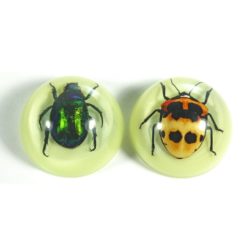 "1.5"" Beetle Magnets, 2pc Set"