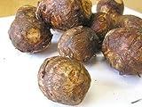 【西日本産、九州産】 有機または自然農法 里芋※約500g×2(約1kg)