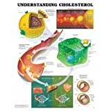 AWW 9781587793264 Understanding Cholesterol 20 in. x 26 in.Laminated