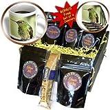 Danita Delimont - Birds - Buff-tailed Coronet bird, Birding Lodge, Ecuador - SA07 RKL0025 - Raymond Klass - Coffee Gift Baskets - Coffee Gift Basket