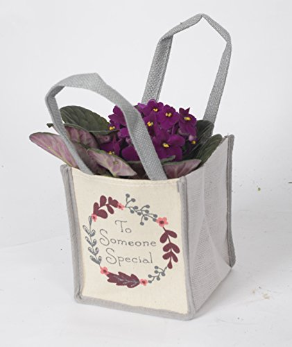 african-violet-gift-bag-ideal-houseplant-gift-pack-and-fast-delivery-full-of-flowers-and-will-last-m