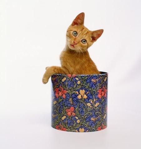 Kitten Sitting in Flowered Cookie Tin - 24