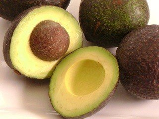 fantastic-avocado-tree-5-gallon