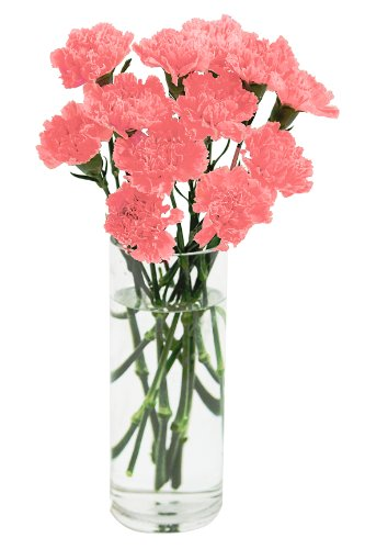 Pink Carnation Bouquet (12 Stems) – With Vase