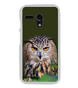 Staring Owl 2D Hard Polycarbonate Designer Back Case Cover for Motorola Moto G :: Motorola Moto G (1St Gen)