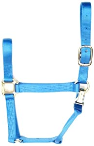 Accent 1-Inch wide Premium Halter for Small Horses, 700 to 1000-Pound, Blue Lagoon