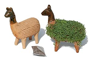 Grow Your Own Cress Figure (Including Cress Seeds) - Fair trade from Mexico