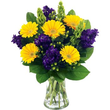 inky-twinky-bouquet-an-intriguing-arrangement-of-inky-purple-stocks-and-mellow-gerberas
