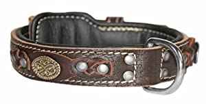 Dean & Tyler Dean's Legend Dog Collar with Black Padding and Chrome Plated Steel Hardware, 22 by 1-1/2-Inch, Brown