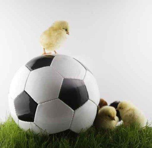 Soccer - 24