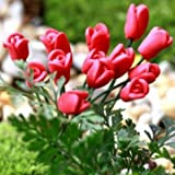 Artificial Flowers Callalily Tulip Rose Small Ornaments Moss Micro Landscape (#05)