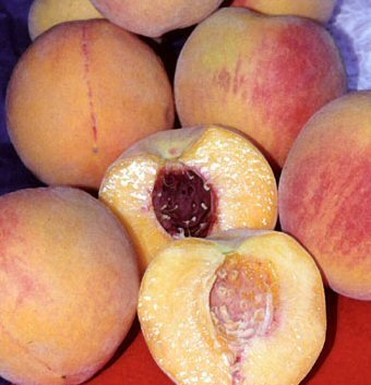 Peaches ~ guide to whats in season at Farmers Market Online