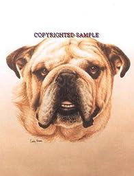 English Bulldog - Portrait by Cindy Farmer