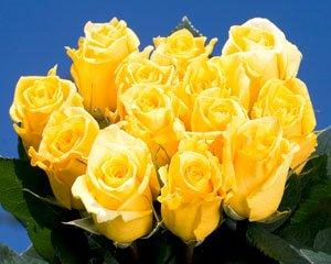 Gold Star Roses 250